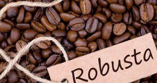 خرید فله قهوه روبوستا