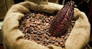 پودر کاکائو نیدگرو اسپانیا - Nidegro