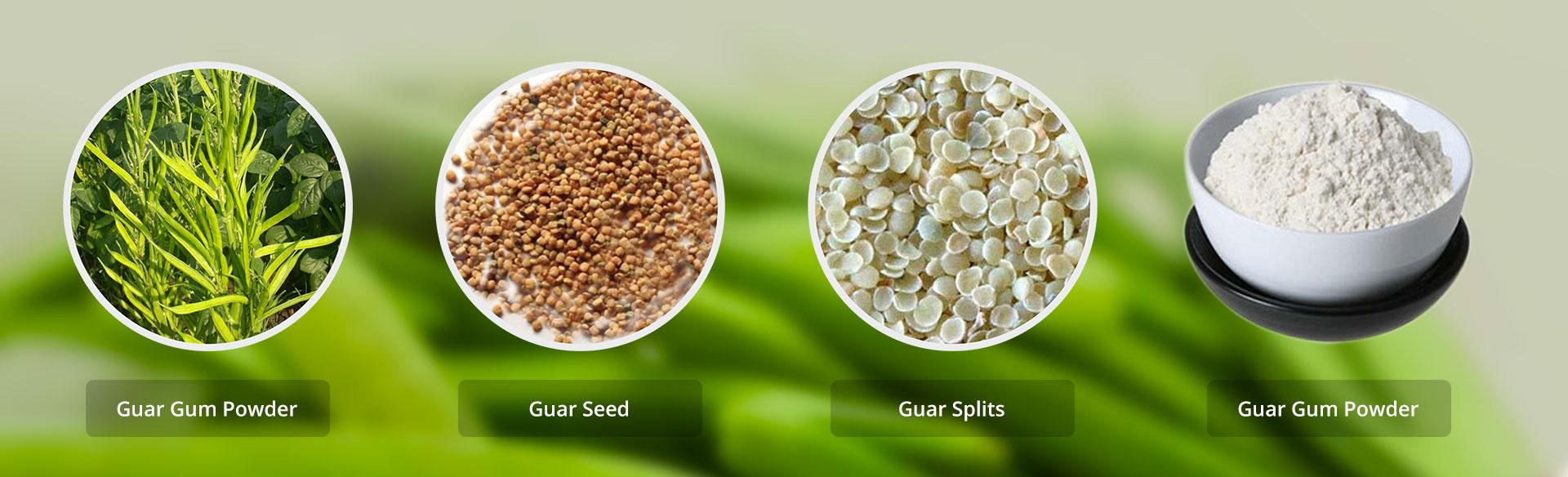 پودر گوارگام را از کجا تهیه کنیم